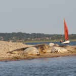 2014_seals-at-blakeney-point-jpg